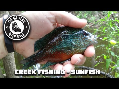 Creek Fishing - Sunfish