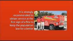 Florida Flea Control | Pest Video - Port St. Lucie, Stuart, Jupiter, Wellington, Vero