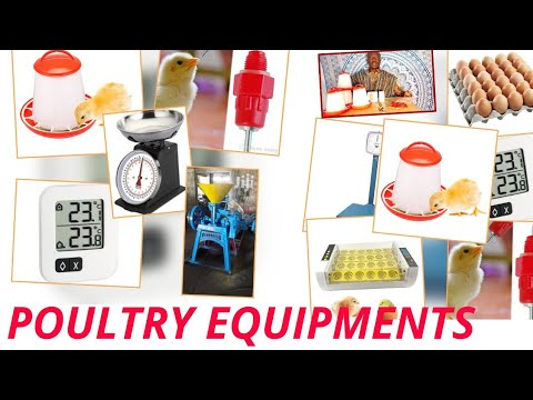 How To Start Poultry Farm In Ghana /Equipments You Need To Start