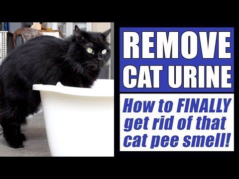 how-to-remove-cat-urine-smell-completely!