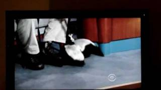 Honey Badger appears on Late Night with David Letterman brought by Jack Hanna zoologist
