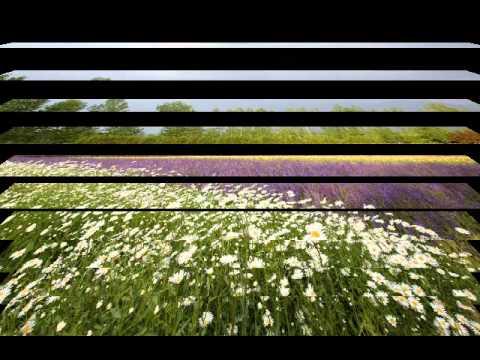 REFLECTION/ SECRET GARDEN mp3