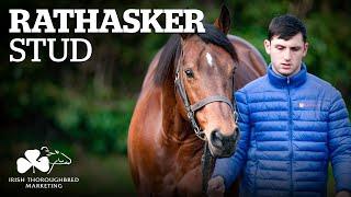 Irish Stallion Showcase 2021 - Rathasker Stud