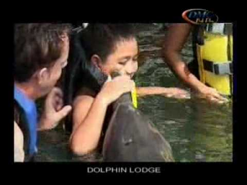 Bali Dolphin Tour | Swimming with dolphins in Bali!