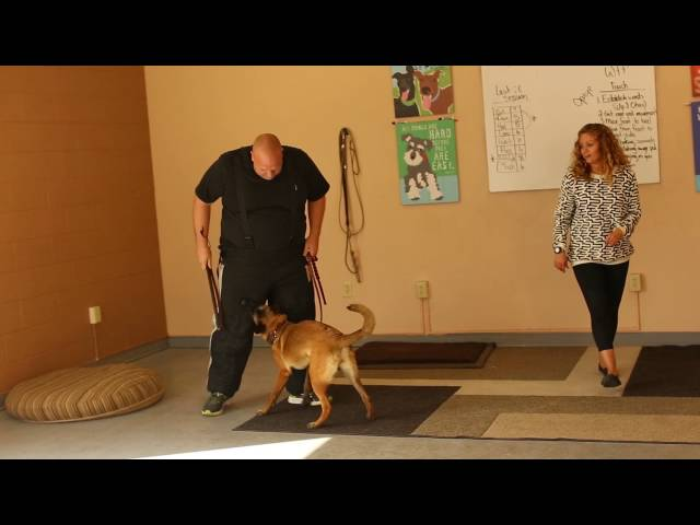 Real Dog Trainers of SLC - Off the Clock, Utah Dog Trainers