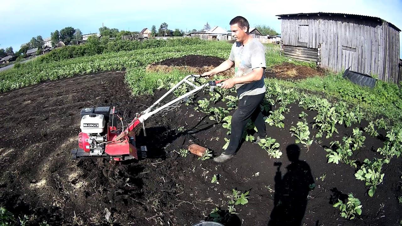 семена посеянные в почву