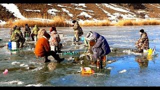 Эта ДИКАЯ ПЛОТВА топит УДОЧКИ В ЛУНКАХ Зимняя рыбалка на РЕКЕ 2020