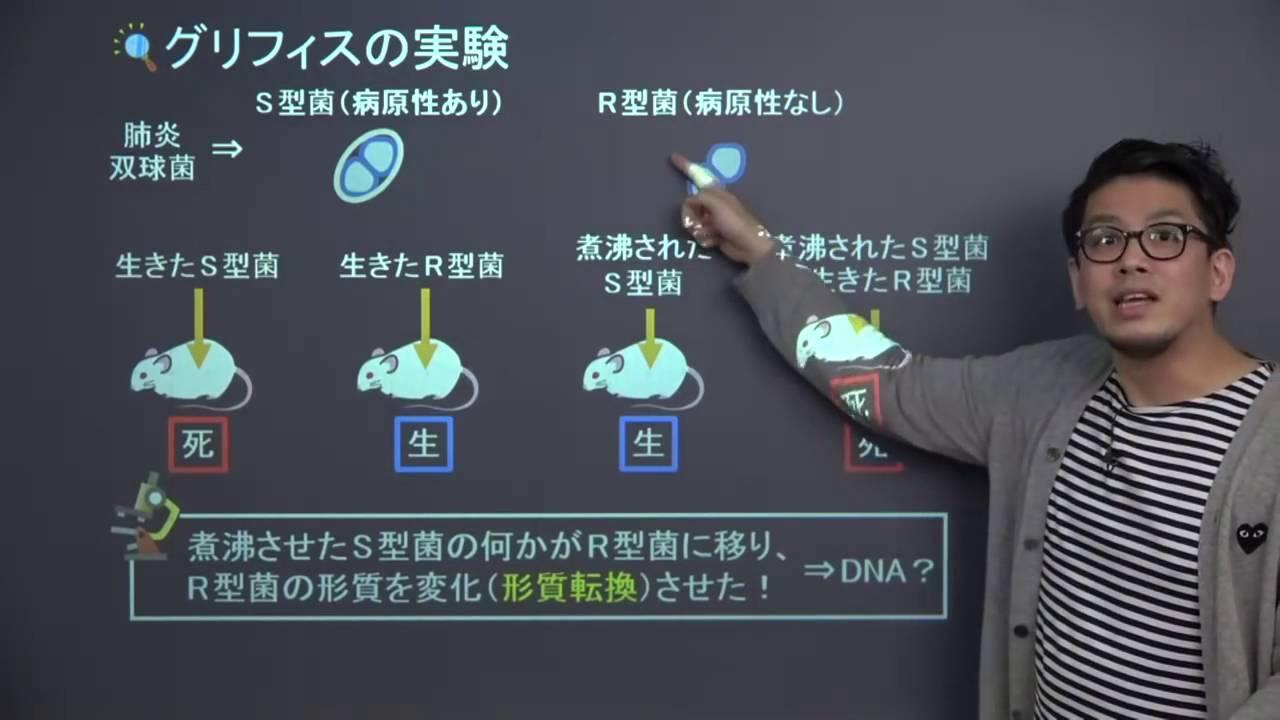生物基礎】 遺伝子1 グリフィス...