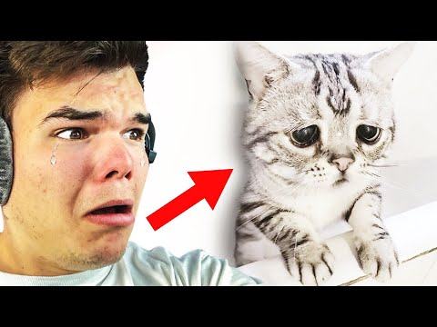 REACTING TO THE SADDEST VIDEOS ON THE INTERNET!