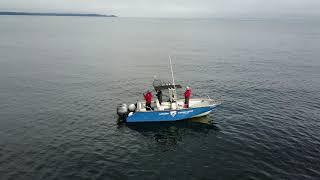 Amazing drone footage of spring salmon from Langara fishing lodge