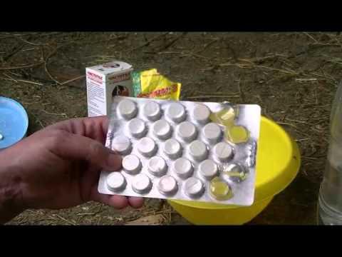Лечение глистов – схема лечения глистов у взрослых и детей