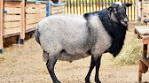 Купить сельскохозяйственных животных и птиц, коров свиней лошадей овец кроликов пчел цыплят, оптом и в розницу объявления о продаже, цены и спрос.