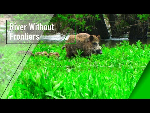 River Without Frontiers - The Secrets of Nature