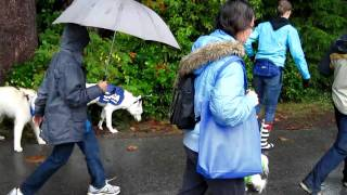 """This was an event called """"Paws for a Cause"""" by BC SPCA at Stanley P..."""