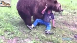 Зверье нападает на людей  Хищники и животные