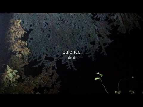 palence - falcate [Full EP]