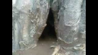 Baobab Tree Giving Birth-Zim Quality