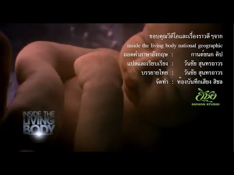 Inside the living body THAI 360
