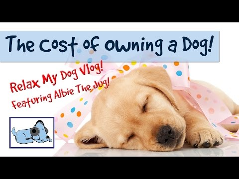 how-much-does-it-cost-to-have-a-dog?-the-real-cost-of-a-dog!