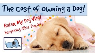 How Much Does it Cost to Have a Dog? The Real Cost of a Dog!