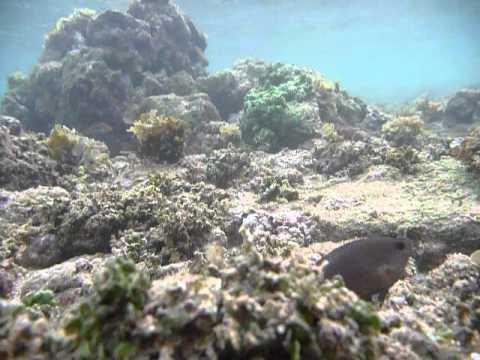 Sri Lanka,ශ්රී ලංකා,Ceylon,Coral Reef (01)
