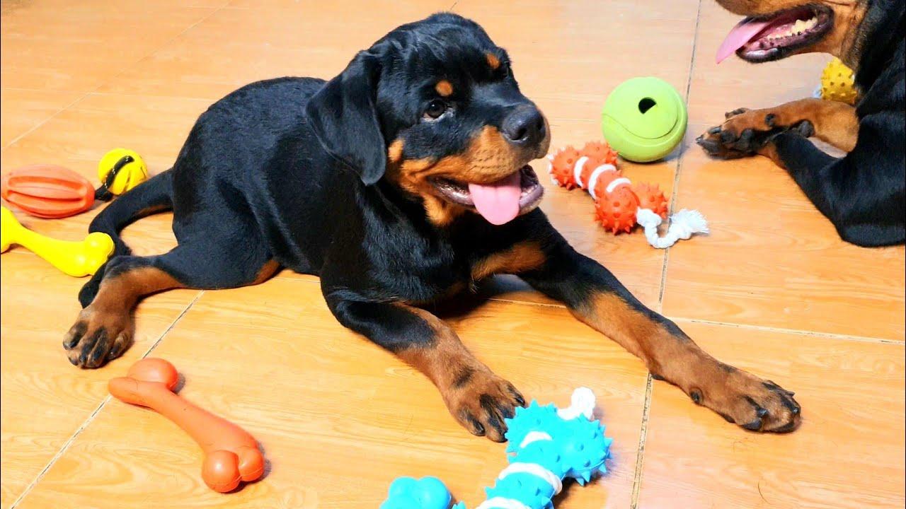 Test đồ chơi cho chó #dogstoy: Vui hớn hở- Chơi xả láng!