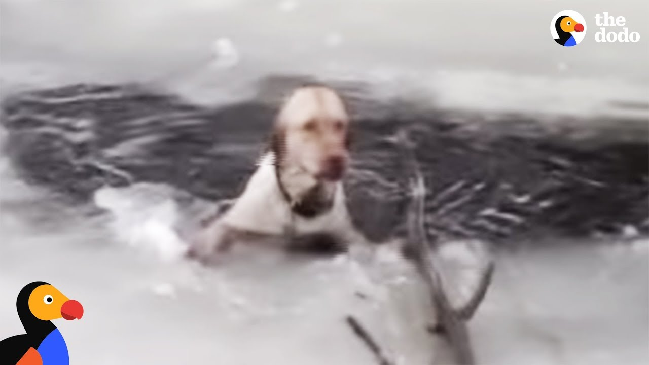 Dog Stuck In Icy Lake Cries To Rescuers For Help