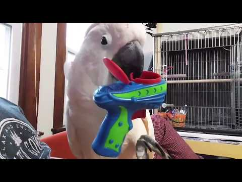 When A Bird Gets Mad (For No Reason)