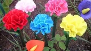 Carnation Flower Garden | Flower Pictures