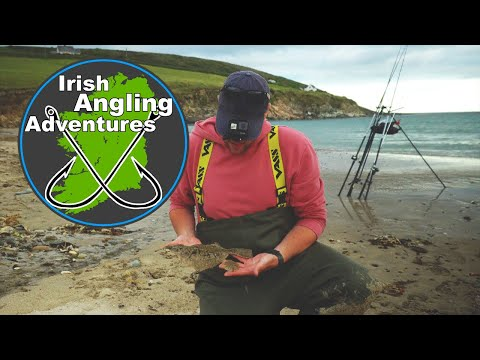 West Cork Mullet, Flatfish And Weavers