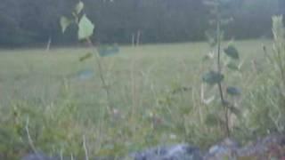 jag lockar in en räv(jag lockar in en liten ung räv med munnen. fox calling., 2009-08-10T09:53:48.000Z)