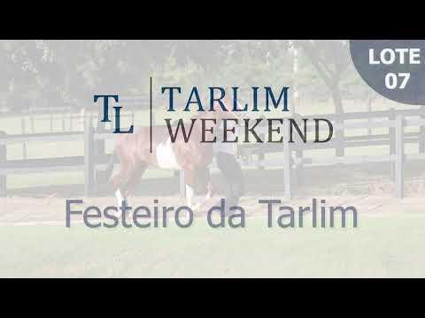 Lote 07 - Festeiro da Tarlim (Potros Tarlim)