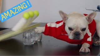 OMG ! This Dog has Amazing Talents ! Fart Dog
