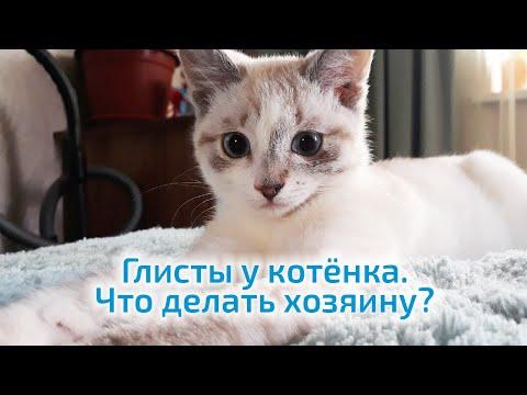 Глисты у котёнка Что делать хозяину?