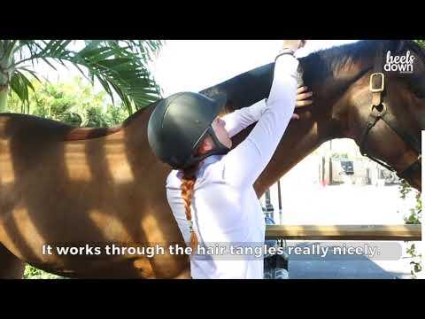 Groom Your Horse The Right Way With Lauren Fischer
