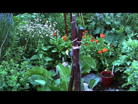 Diploma In Herbology - Royal Botanic Garden Edinburgh
