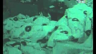 BBB11 MARIA FAZ SEXO ORAL COM WESLEY