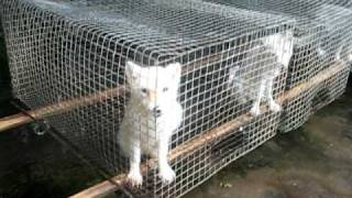 Dogs farm for fur in china - animal cruelty