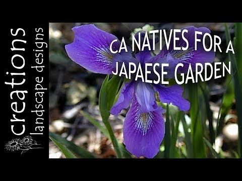 Top 3 California Native Plants For A Japanese Style Garden