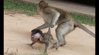 Big Monkey Drag Poor Baby Cruelly Poor Baby Monkey Cry Loudly