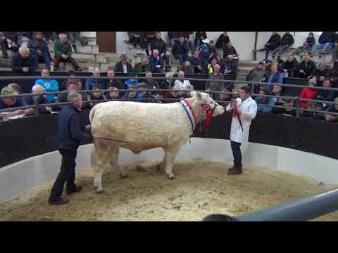 Irish Charolais Premier Sale March 2018 (Female Section)