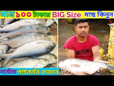 FISH Market Barasat (Best) wholesale Price|Biofloc Fish Farming|Ep.14|The Roshik Bangali|
