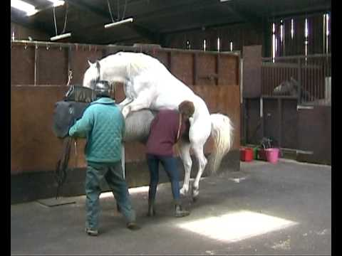 Thumbnail: Collection from horses for Artificial Insemination at Glenwood Stud