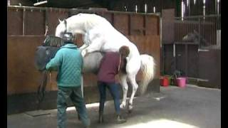 Collection from horses for Artificial In...