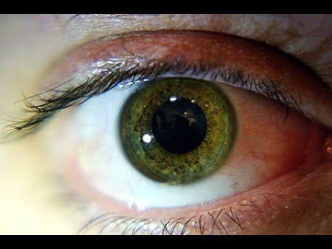 Why Crucial Decisions Can't be Made in the Blink of an Eye (2006)