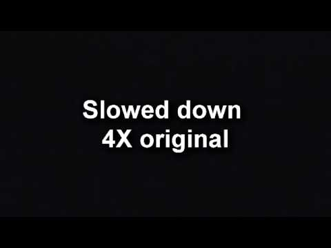 critter sounds slowed down youtube
