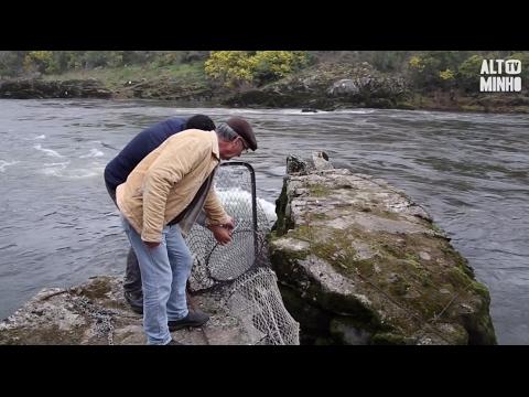 Pesca da lampreia em Melgaço