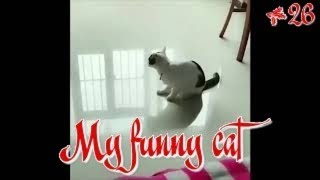 Funny Cats Videos 26. Try not to laugh animals.