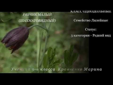 """Презентация """"Красная книга Донбасса"""""""