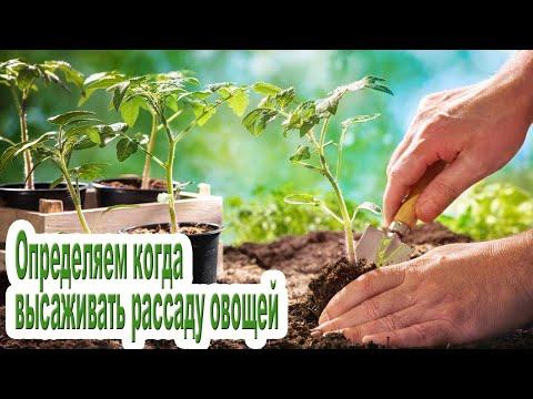 Как определить когда высаживать рассаду / Сроки высадки овощей